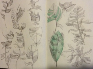 Feather Drawings